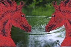 redhorses ripples-in-water copy
